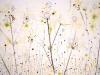 irish_spring