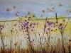 lavendar_fields